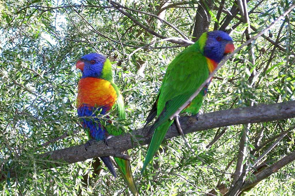 Птицы в зоопарке Мадрида