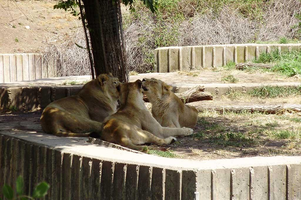 Жители зоопарка в Мадриде