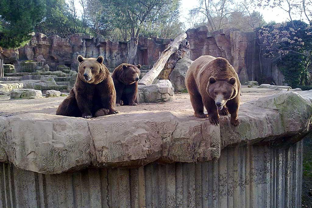 Кто обитает в мадридском зоопарке