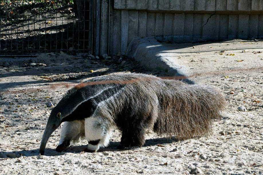 Мадрид: Зоо-аквариум
