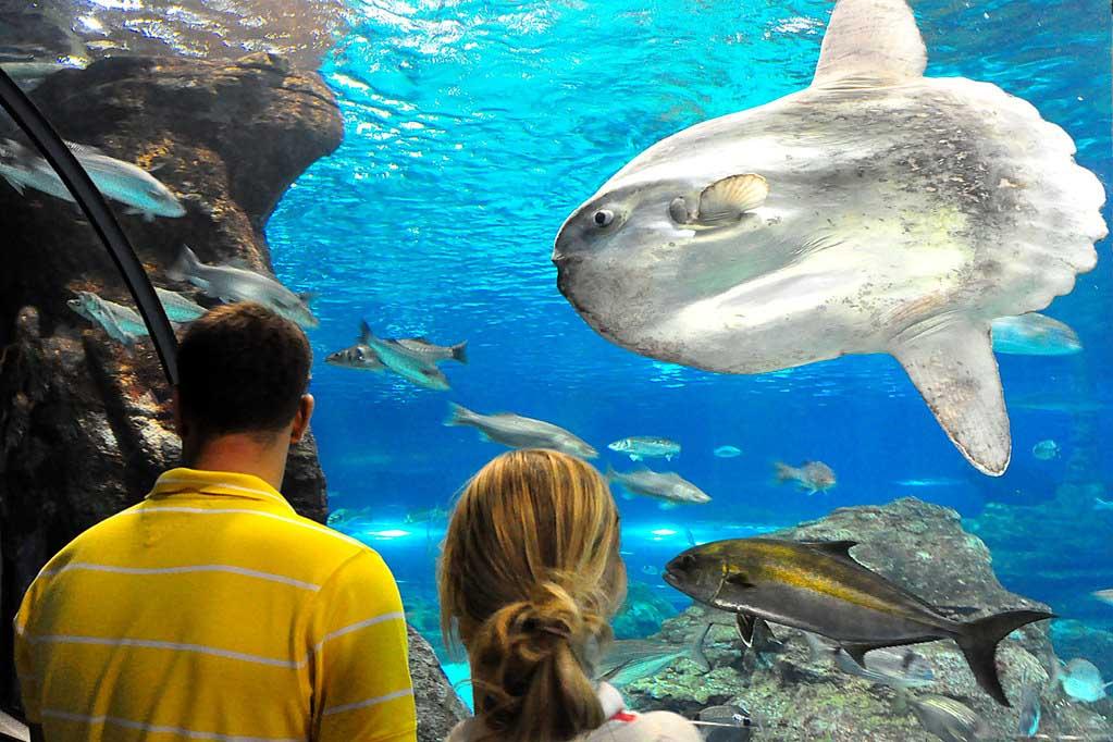 Что посмотреть в аквариуме Барселоны