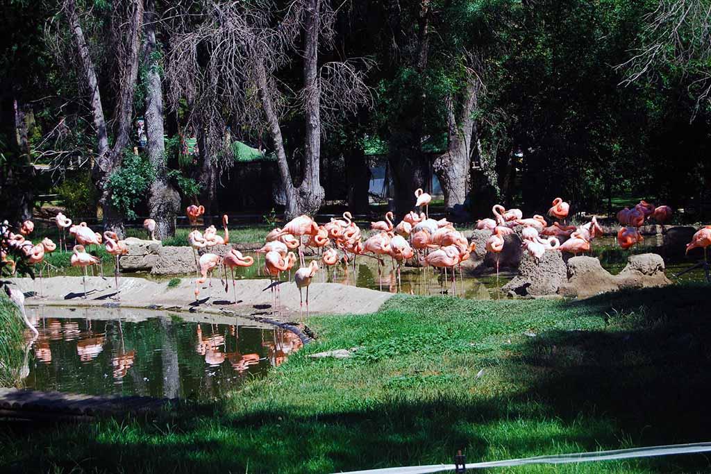 Мадрид: зооаквариум