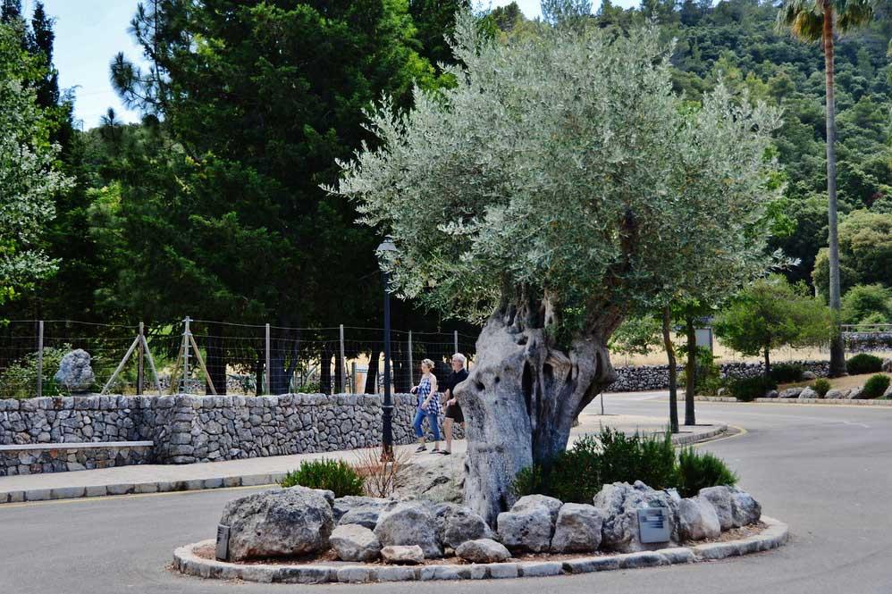 Ботанический сад монастыря Льюк, Майорка