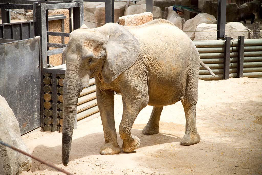 Когда лучше посетить Зоопарк в Барселоне