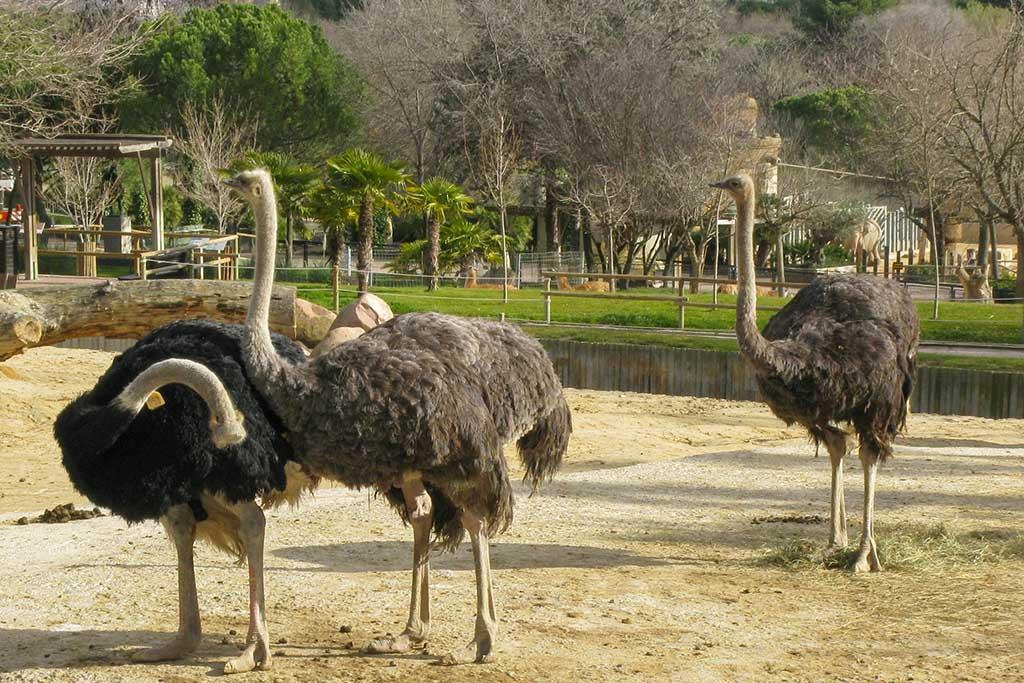 Огромный мадридский зоопарк