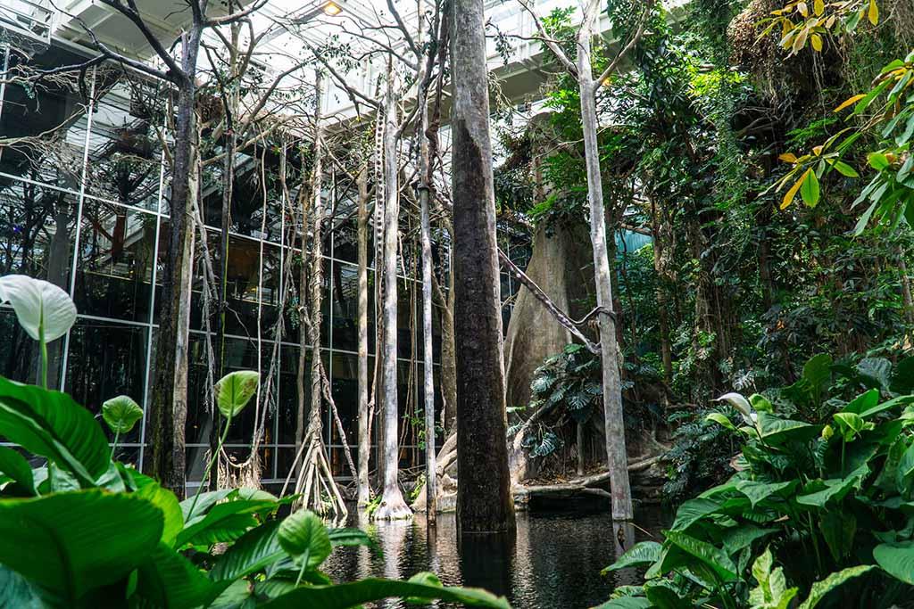 Что посмотреть в КосмоКайша — затопленный лес