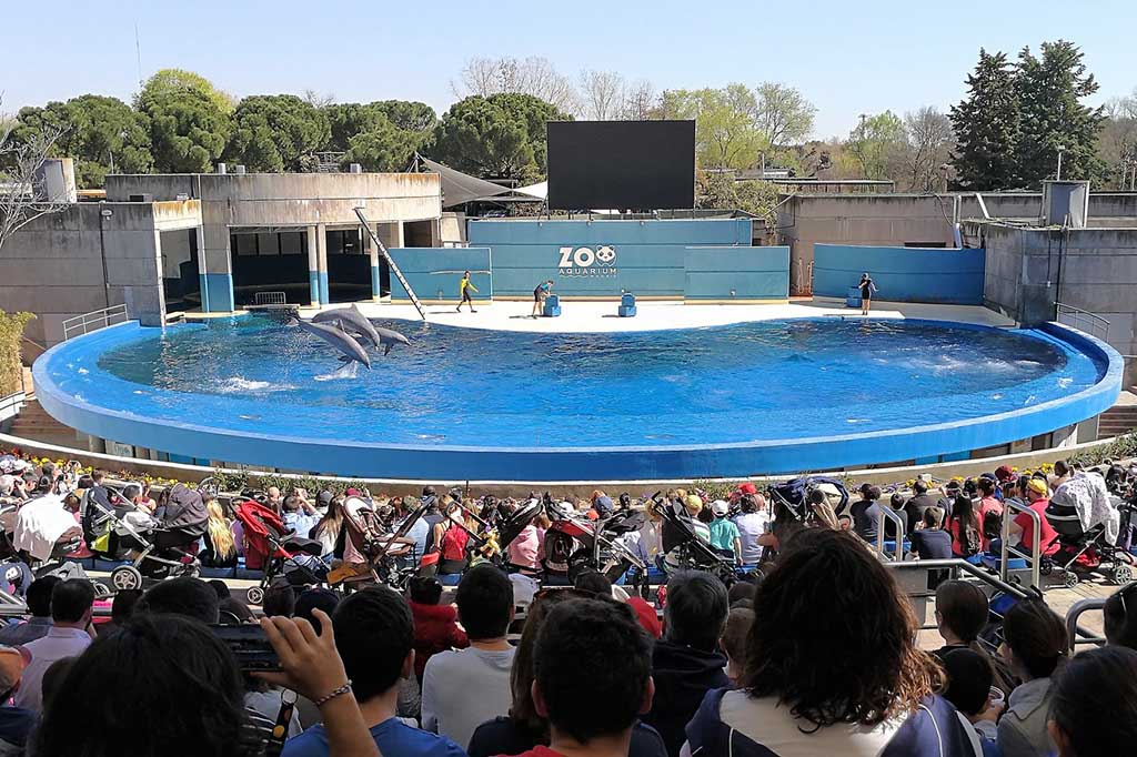 Представление с дельфинами в Мадридском аквариуме