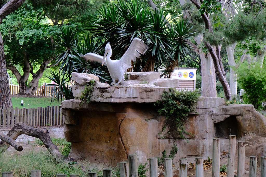 Зоопарк Барселоны