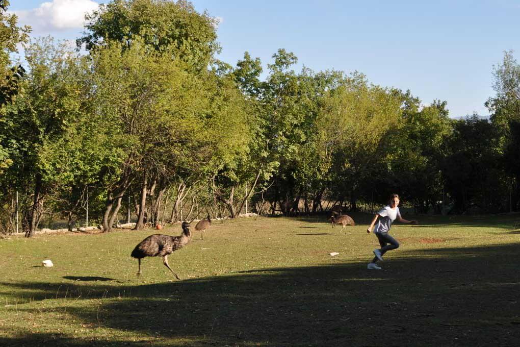 Куда отправиться с детьми в Черногории, зоопарк